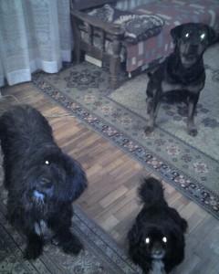 Берри, Тери и Оззи