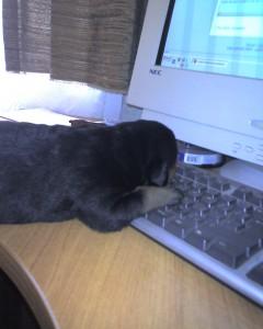 Куче с компютър