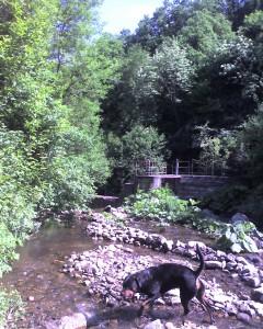 Берра в реката