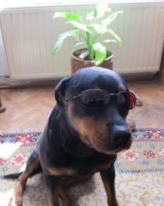 Берра с очила Polaroid