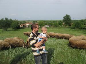 Овце на село