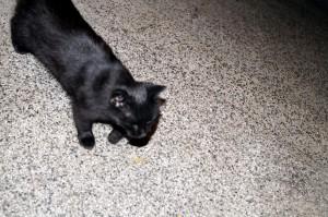 Черно коте